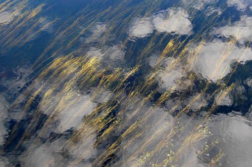 Favoritbild faktiskt. Jag gillar sjögräsets färg, jag gillar ringarna på vattnet. Jag gillar bilden. Den är dock bättre i full storlek.
