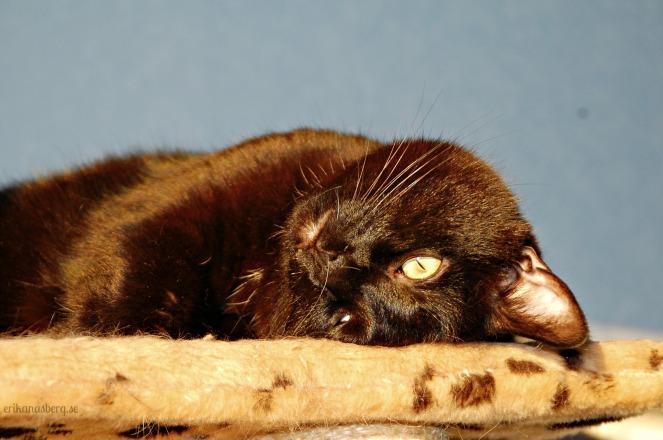 """Tar inspiration från min katt en dag som denna:""""Om jag ser livet från den här vinkeln så kanske det ser annorlunda ut...!"""""""