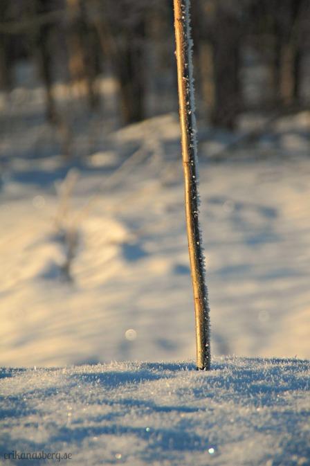 Jag hittade en pinne som stack upp ur snön.