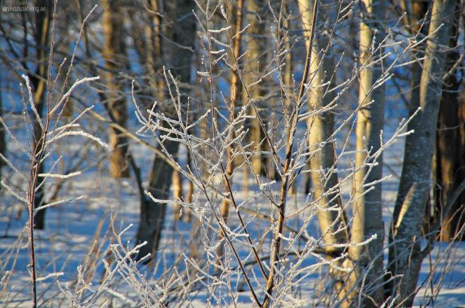 Egentligen ganska rörig bild, men jag gillar frosttäckta grenar så here it is!