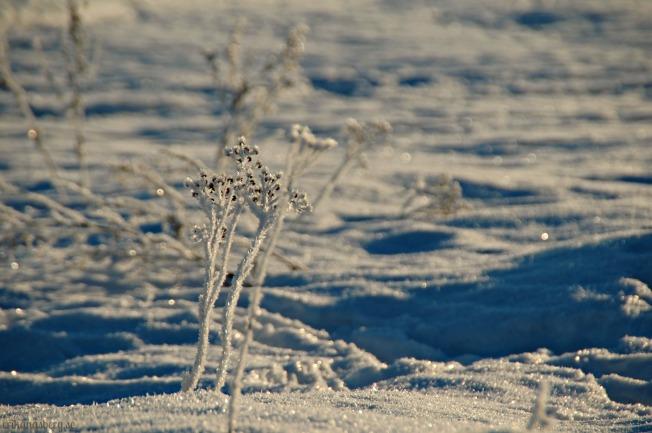 En växt som troligtvis fryser lite lätt...!