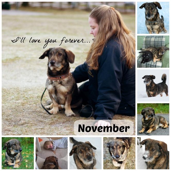 Novemberbilden tillägnas Lillebror, som jag var tvungen att omplacera den 29/11. Jag saknar honom varje dag...